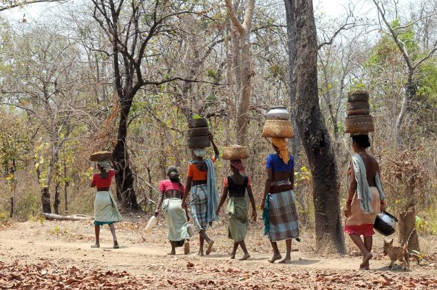 कोरोना-काल में आदिवासी : 'बाजार बंद होने से क्या हुआ, जंगल तो खुला  है'